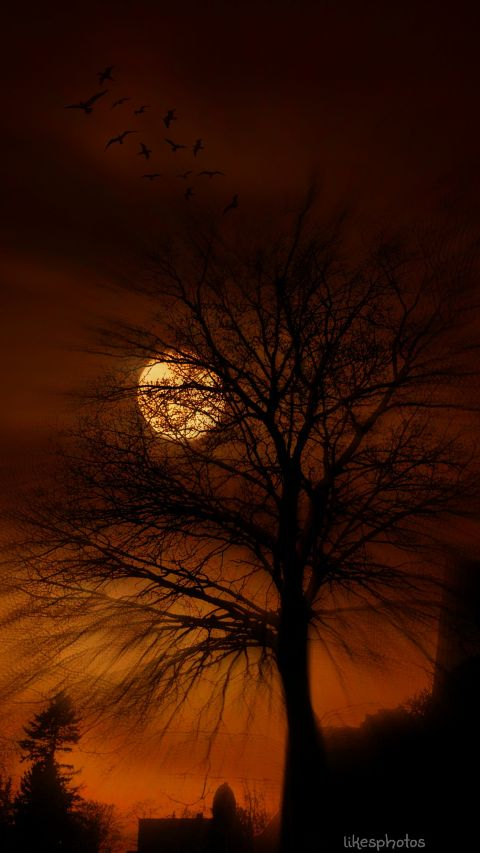 music,tree,red,moon,night