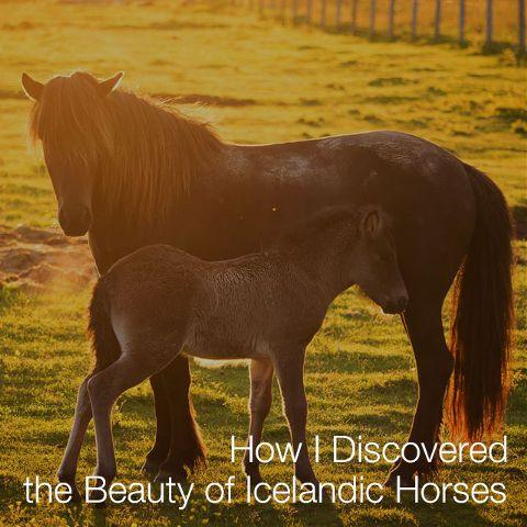 how to photograph Icelandic horses