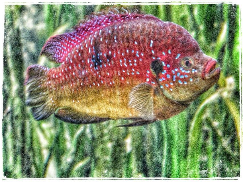 For the #fish Blub blub :))