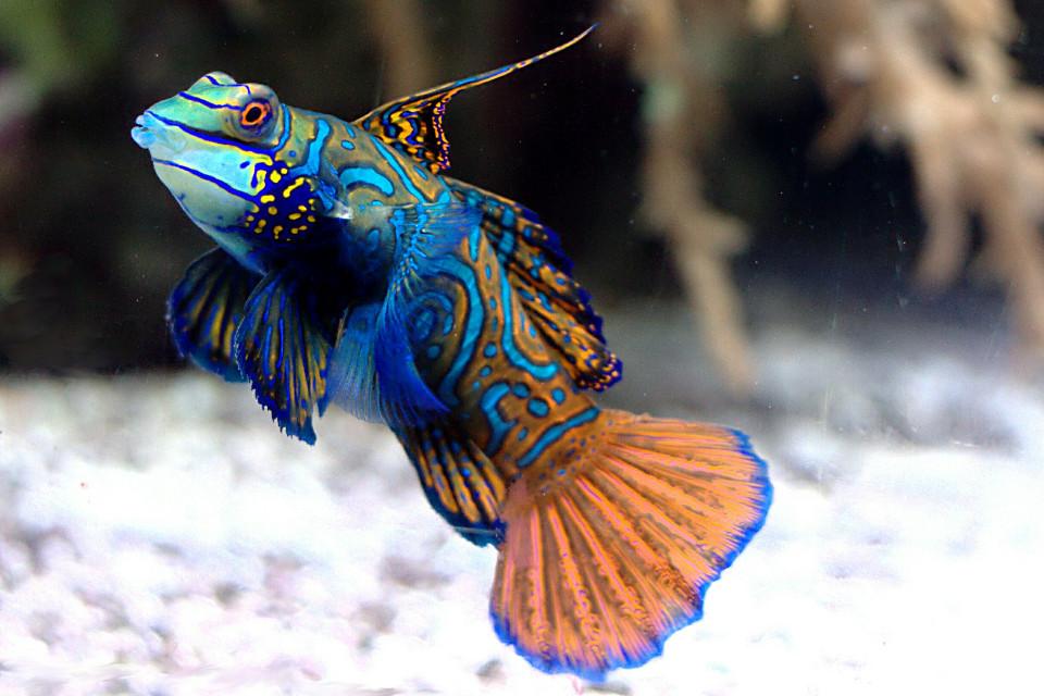 Hello friends  #fish
