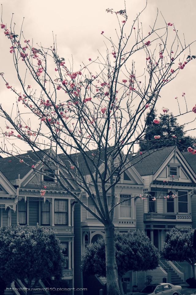 #pink #blossom #photography #colorsplash