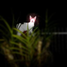 cats hue blur