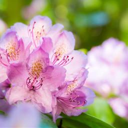 bokeh flower nature