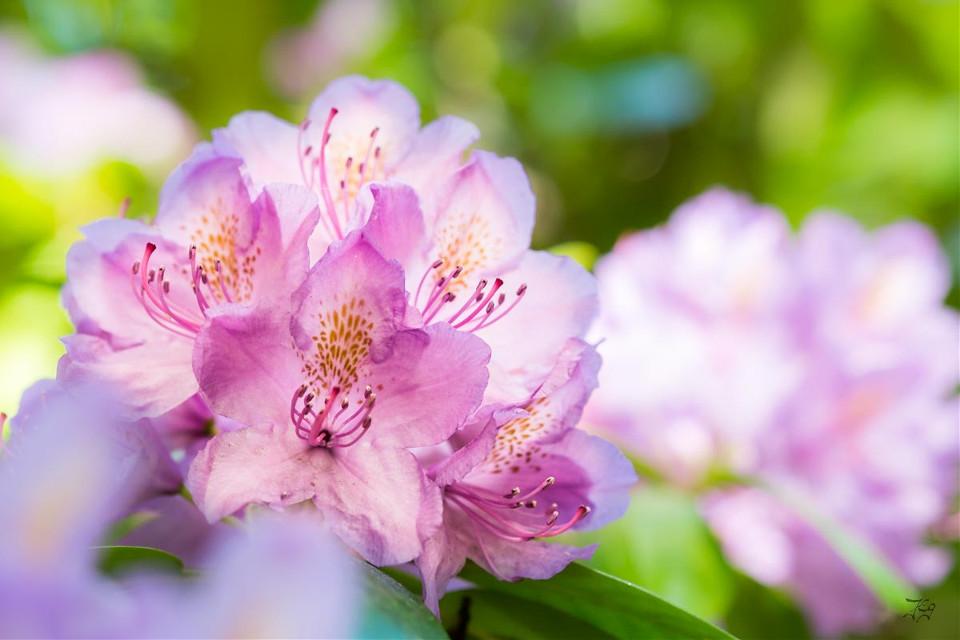 #bokeh #flower #nature