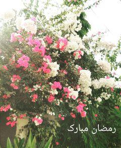 flower nature photography summer ramadankareem