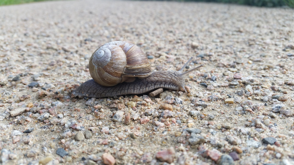 #photography #nature #animals #snail