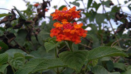 nature flower freetoedit
