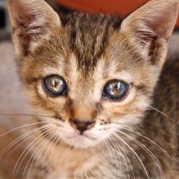 cat mycat love nature petsandanimals
