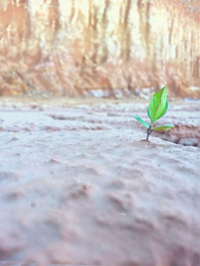 Bertahan (harapan)   #bokeh #photography #nature #flower