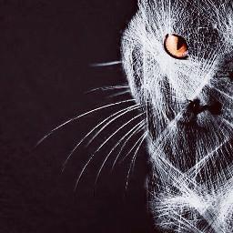 freetoedit editstepbystep drawtools pets black captured