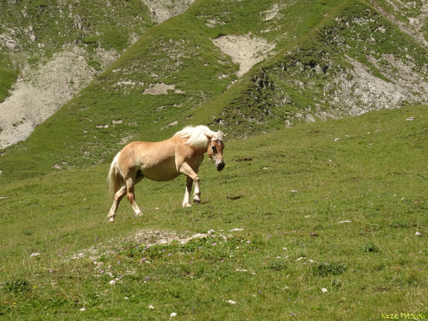 *day five*   #nofilter #nature #horse #high #green #grass #mountain