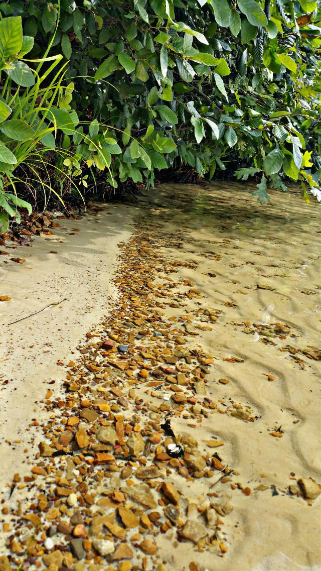 #photography  #nature  #tree  #shoreline #water