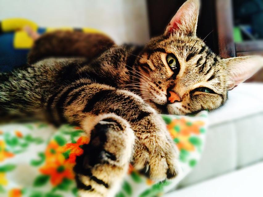"""""""Non è facile possedere l'amicizia di un gatto, bisogna prima conquistare l'onore. E inpossibile è possedere un gatto, diagramma della leggerezza dell'aria. Così misteriosi e indipendenti, pigri e sfuggenti, elettrici e carezzevoli."""" #cat #pets #petsandanimals #wppanimals  #emotions #people #photography #dailyinspiration"""