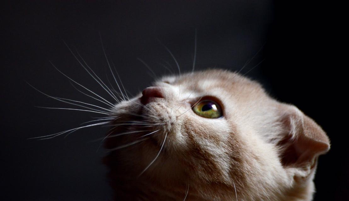 cat of @dionco  Welcome in PA ٩(๑´3`๑)۶♡   #summer #cat #cute #summer #petsandanimals