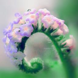 nature flower macro bokeh photography