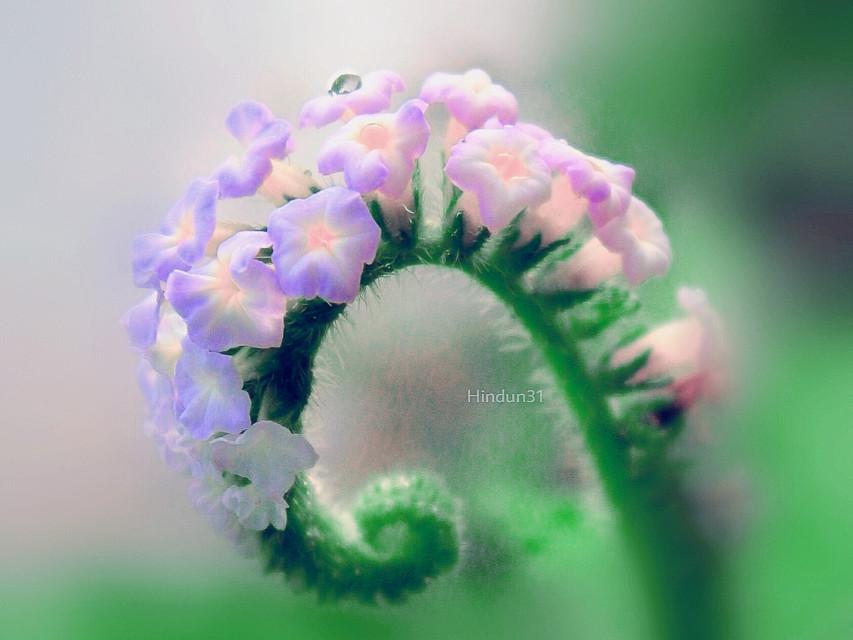 How are you Picsart friends 😊  @handayanishu  Batas waktu....   #nature #flower #macro #bokeh  #photography