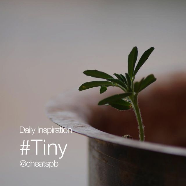 daily inspiration #tiny