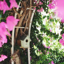 bougainvilleas cage mediterranean aphrodisias holiday