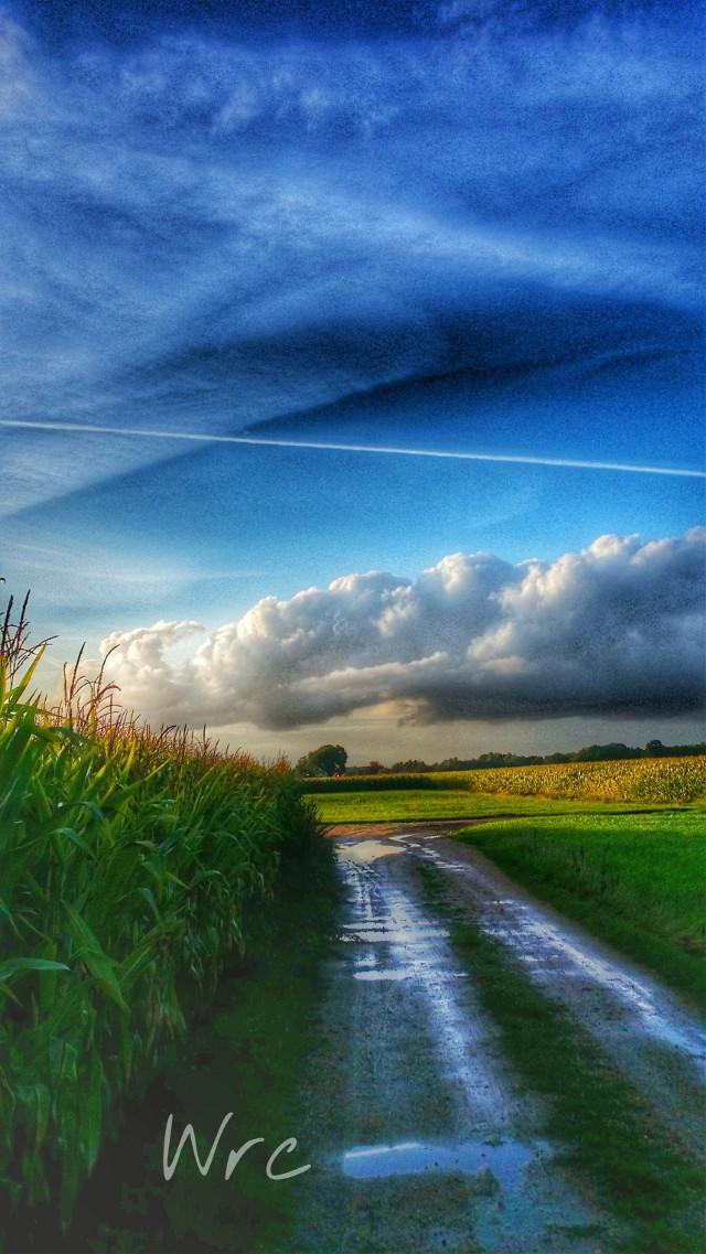 #colorful  #colorcombo  #colorsplash #corn #sky #sun #summer #nature #natuur #blue  #clouds  #hdr