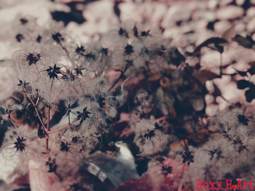 #flowers  #soft  #hue  #nature  #closeup