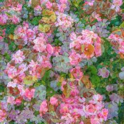 flowers blossoms overlay photoblend floralprint