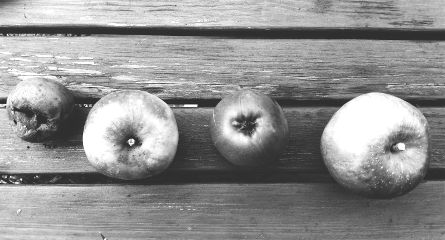lines blackandwhite photography food apples
