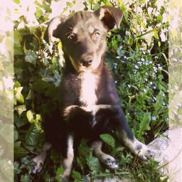 mydog love