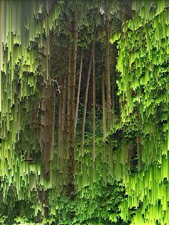 forest nature melt digital art