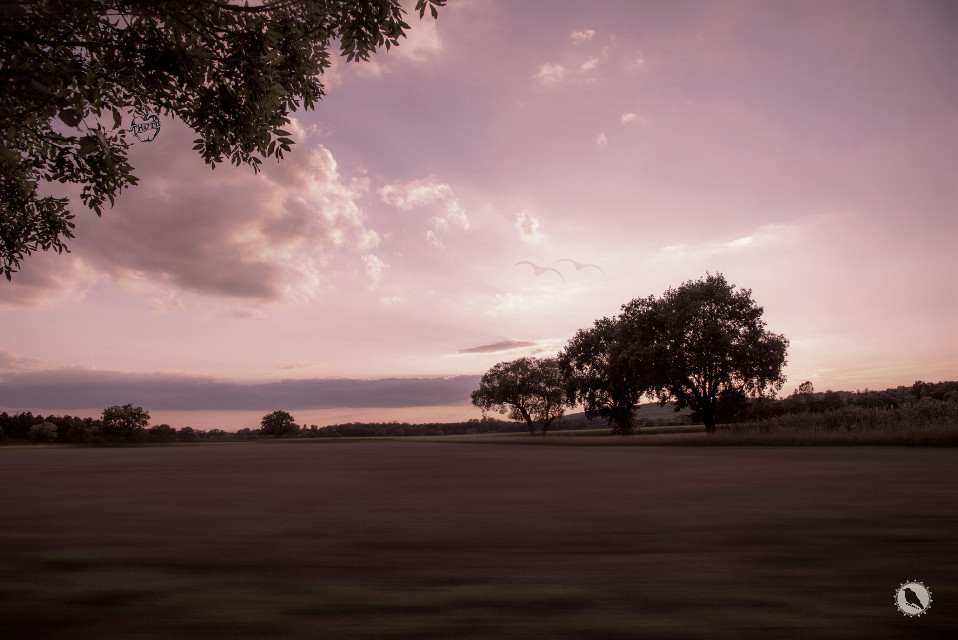 Weather forecast for tonight : dark. -George Carlin #desaturated #pink  #nature #landscape