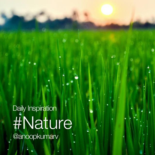 Daily inspiration #nature