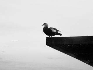 photography nature duck minimal nikon