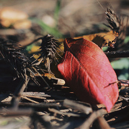 autumn nature herbst leaves macro
